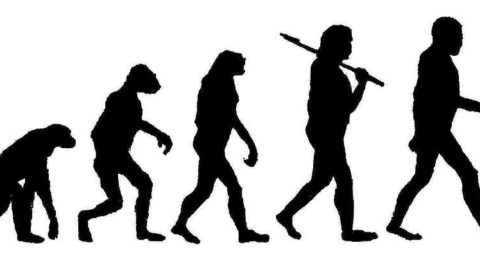 """The word """"evolve""""."""