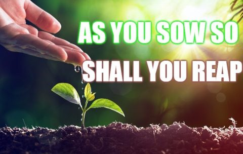 You sow what you reap