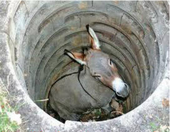 Donkey in a well
