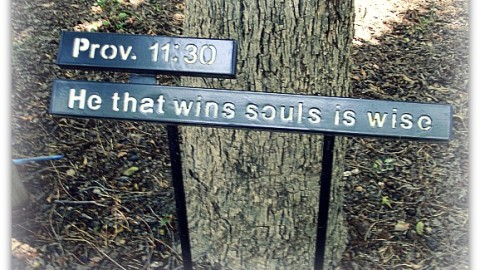 He who wins souls is wise